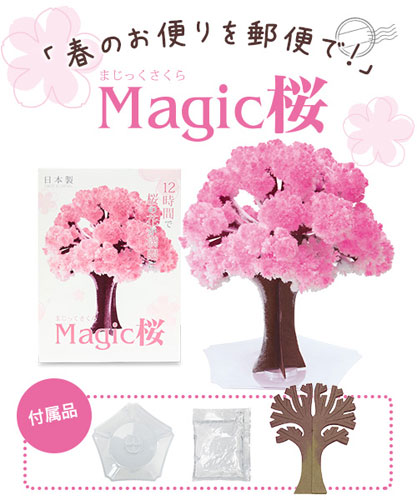 Magic桜 写真1