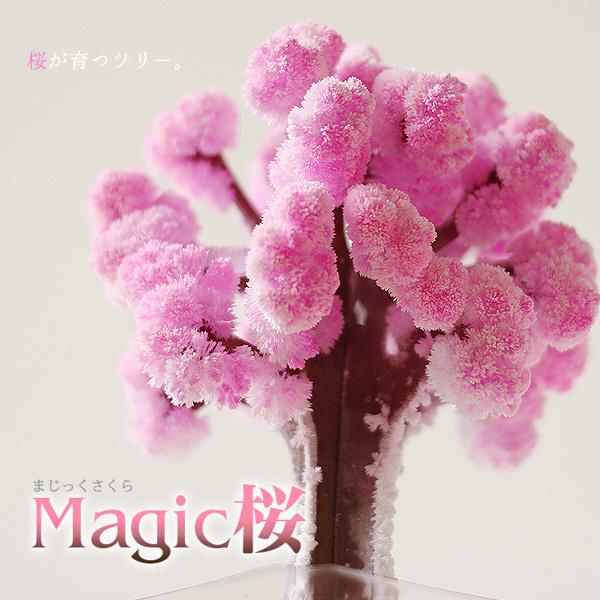 Magic桜 写真3