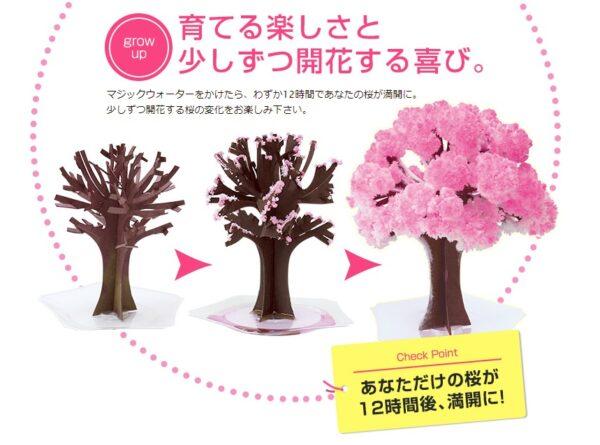 Magic桜 画像