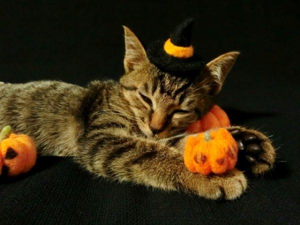 魔女コスプレして寝そべる猫 写真