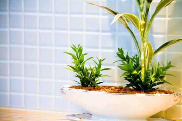 観葉植物 写真
