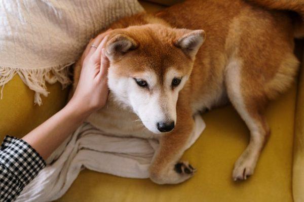 愛犬の悩み 写真